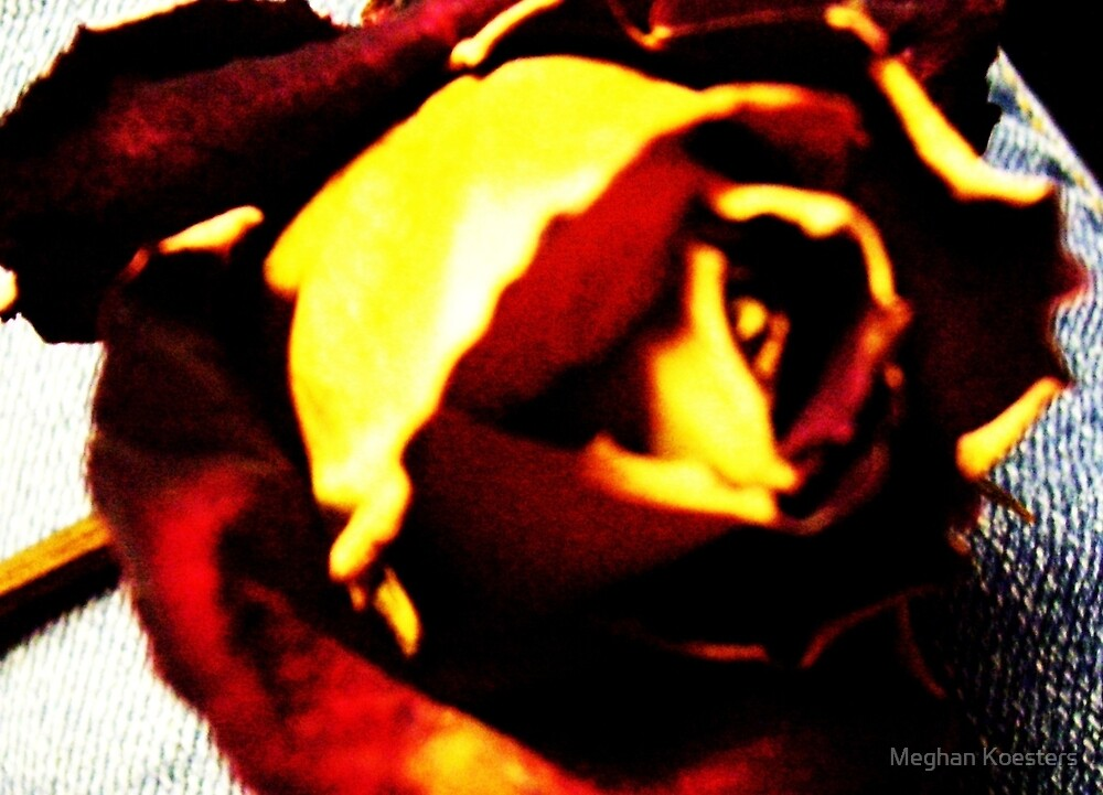 Fire Rose by ReadingBeauty