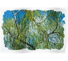 Birch tree - Spring is in the air Poster