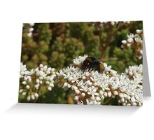 Bee Greeting Card