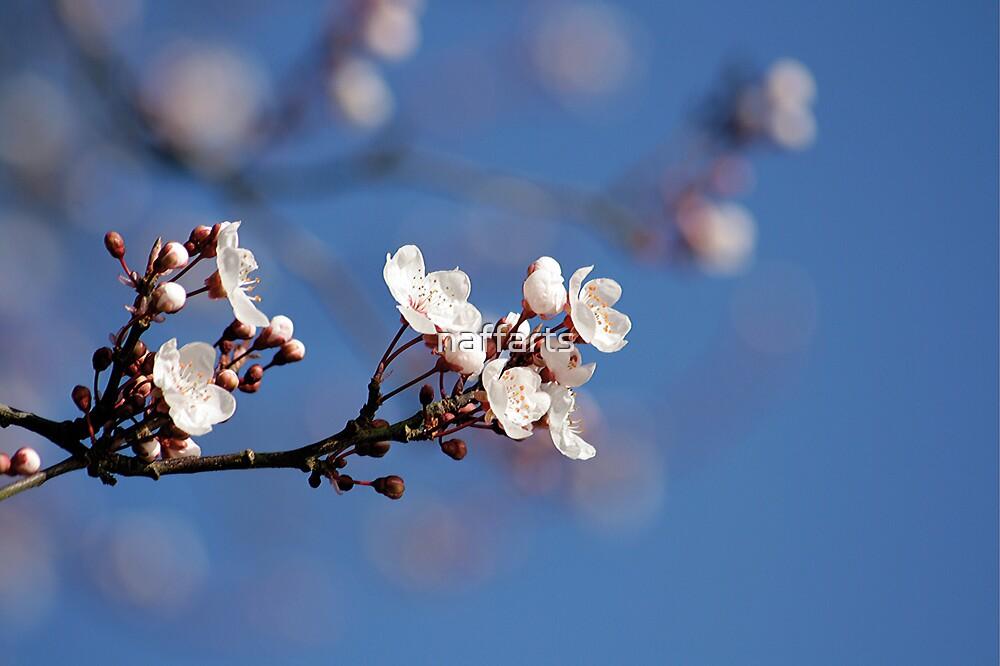 Apple Blossom by naffarts