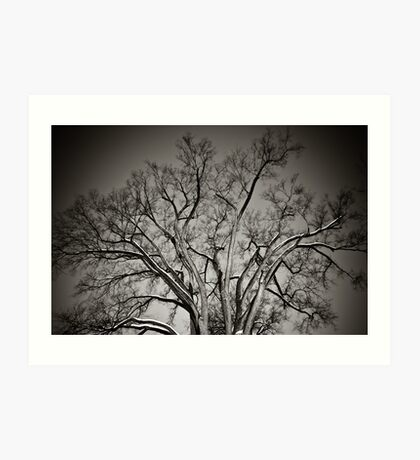 Hanover Tree Art Print