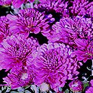 Pretty in Purple by Lori Walton