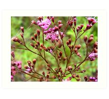 Lynx Spider in the Pink Art Print