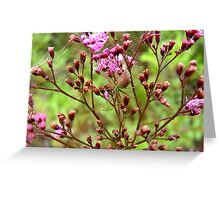 Lynx Spider in the Pink Greeting Card