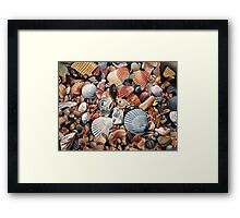 Original detailed watercolor illustration of an array of shells. Framed Print
