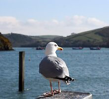 Lone seagull by naffarts