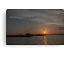 Bird Sanctuary in the Everglades Canvas Print