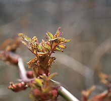 Sticker bush leaves by Jeff Stroud