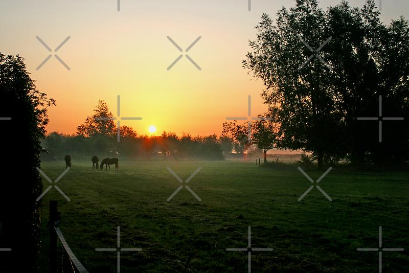 Sunrise over Horses by Geoff Carpenter