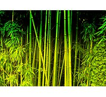 Green world Photographic Print