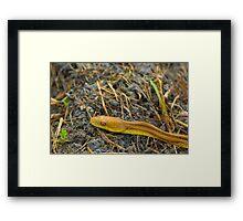 Slithering By Framed Print