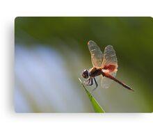 Dragonfly Drama Canvas Print