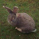 Rabbit by Amanda Norris