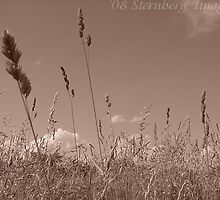 Field of Grain by sternbergimages