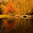 Sunnyhurst Woods, Darwen, Lancashire by Stephen Knowles
