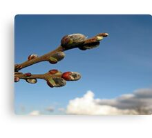 Willow Clouds Canvas Print