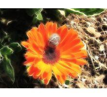 Stripes on Orange in Fractalius Photographic Print