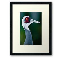 white-naped crane Framed Print