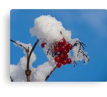 Winter Berries in Snow Canvas Print
