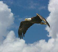 AMERICAN BALD EAGLE by TomBaumker