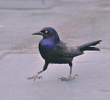 Black Stalkings by LavenderMoon