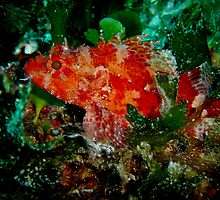 scorpionfish by mike88138