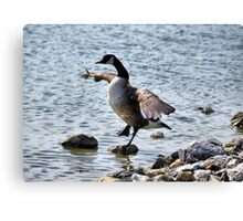 "The Karate ""Goose""? Canvas Print"