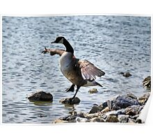 """The Karate """"Goose""""? Poster"""