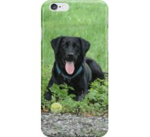 Loki - Black Labrador iPhone Case/Skin