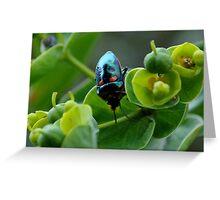 photoj  'Bug Time' Greeting Card