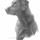 Chocolate Labrador watching drawing by Mike Theuer