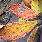 Rainbow Cactus by Sarah Stallings