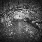 Silver Path by Matthew Larsen