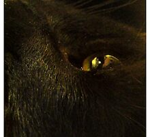Envious Cat by Gozza