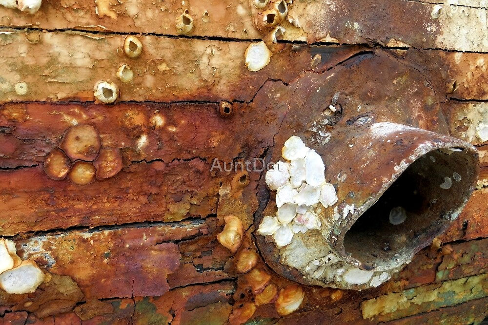 Decay on Miss Clarabelle by AuntDot