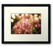 Vintage Flower Framed Print
