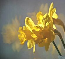 Morning Daffodils by Eileen McVey