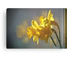 Morning Daffodils Canvas Print