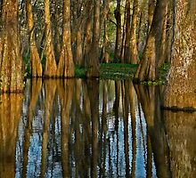 The Mystery of the Bayou by cclaude
