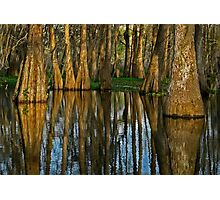 The Mystery of the Bayou Photographic Print