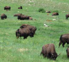 Grazing Herd of Bison - Buffalo Landscape Sticker