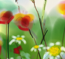 Poppies and Daisies Painting Sticker