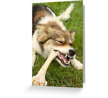 Mongrel pet dog enjoying a large bone Greeting Card