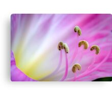 ...anyone want a crumbed banana?... (formerly ...thy golden breath...) Canvas Print