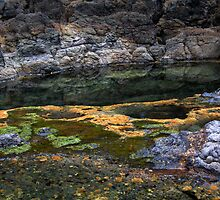 Rockpool Reflections, Cape Schanck, Mornington Peninsula National Park, Victoria by Darren Greenwell
