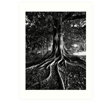 Early Evening In The Garden Of Good And Evil Art Print