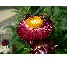 Flower & Wasp Photographic Print