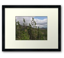 Pine Trees on the Side of a Mountain Framed Print