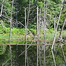 Pondscape by Tracy Faught