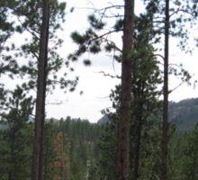 Pine Forest Landscape Scenery Sticker